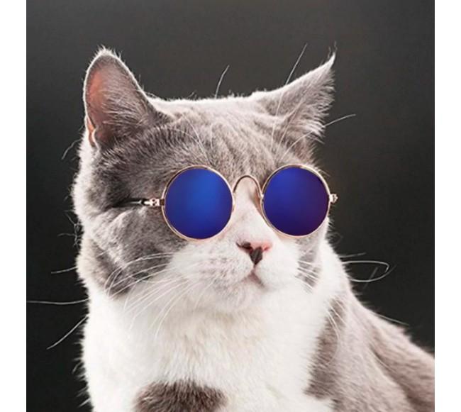 Stilingi akiniai katėms ir...
